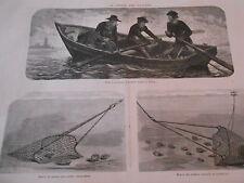 Gravure 1873 - La Pêche des huitres à l'aviron à la drague