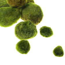 "Giant Marimo Moss Balls x2 + 1FREE 1""~1.4"" - Live aquarium tank plants low light"
