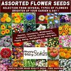 FLOWER GARDEN SEEDS 100+ TYPES sunflower wild flowers pansy marigold zinnia many <br/> ASSORTED FLOWER SEEDS, MULTI BUY DISCOUNT UPTO 20% OFF