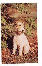 Fox Terrier- Postcard
