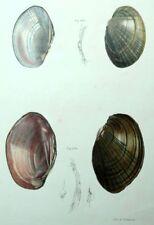 Decoración restaurantes Fruits del mar Conchas conchas Litografía siglo XIX