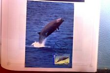 2006 AUSTRALIA WHALES DOWN UNDER SOUTHERN BOTTLENOSE WHALE MAXI CARD