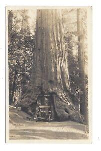 Vintage RP postcard Wawona Tunnel Tree, Yosemite National Park, California, USA