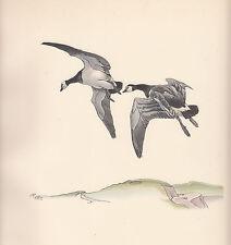 1937 BIRD PRINT ~ BERNICLE GOOSE GEESE