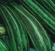 Vegetable - Marrow - Long Green Bush - 3000 Seed - Bulk