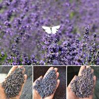 100g Dried Lavender Flowers Dried Granular Filling DIY Lavendula Angustifolia