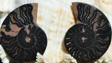 1140 RARE 1 in 100 BLACK Ammonite PAIR Deep Crystals MEDIUM FOSSIL 28grams 45mm