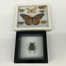 Vtg Lot 2 Framed Taxidermy Insect Green Beetle & Monarch Butterfly Entomology
