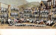 Catalina Island California Fishermen Catch Albacore Antique Postcard K73023