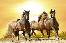 Stampa incorniciata-Confezione da cavalli selvaggi in esecuzione sulla spiaggia (PICTURE POSTER ART)