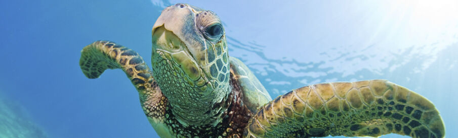 Turtles Digital Camera Treasures