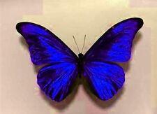 Table de mariage Décorations Bleu Saphir Papillons mousseux rideaux cages à oiseaux