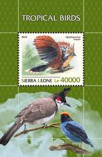 Sierra Leone 2018 Tropical birds fauna   S201811