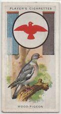 Wood Pigeon Ring Dove Bird Columba palumbus1930s  Ad Trade Card