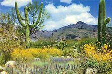 Springtime on the Desert Postcard