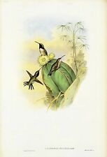 "1990 Vintage HUMMINGBIRD #144 ""BEAUTIFUL WOOD-STAR"" LOVELY GOULD Art Lithograph"