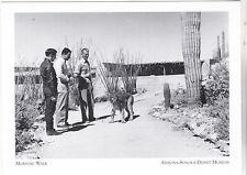 "*Postcard-""Morning Walk"" w/George Mountain Lion II-*AZ Sonora Desert Museum(#151"