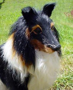 Tierminiatur Collie Hund aus Naturhaar, Tierfigur, 22 x 22 cm Felltier Felltiere