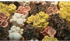 5 Species Blue Pink Yellow King Winter Oyster mushroom Mycelium starter $19