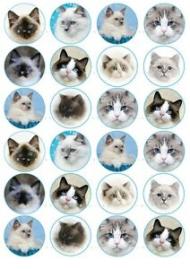 EDIBLE RAGDOLL BI COLOUR SEAL POINT CAT KITTEN ICING CUPCAKE TOPPERS or A4