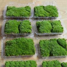 Natural Aquarium Moss Live Aquatic Plants Green Grass Fish Tank Aquarium Decor