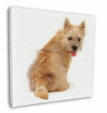 "Cairn Terrier Dog 12""x12"" Wall Art Canvas Decor, Picture Print, AD-CT1-C12"