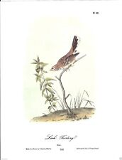Lark Bunting Vintage Bird Print by John James Audubon