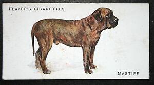 Old English Mastiff   Early 1930's Original Vintage  Colour Card   VGC