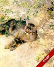 HOUSE CAT RESTING IN THE SUN SUNNING ANIMAL PAINTING PET ART REAL CANVAS PRINT