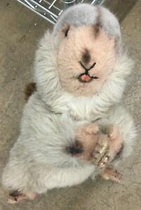 "Steiff Vintage Plush Stuffed Animal Beaver 11.5"" Brown Cosy Nagi Nagy Needs TLC"