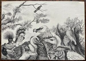 MID VICTORIAN INK DRAWING VARIOUS TYPES OF EXOTIC BIRDS TOUCANS,EAGLES AND OWLS