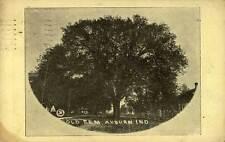 1902 AUBURN IN Old Elm Auburn City & Elm Poem nr WATERLOO IN FORT WAYNE postcard