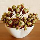 1*60x Succulents Rare Mini Potted Flower Seeds Home Office Decoratives 14# UN
