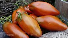 10 graines de tomate rare Poivre Cubain excellente heirloom tomato méth.bio