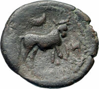 CASTULO Spain 2nd Century BC Very rare Ancient Greek Coin Male Bull   i46572
