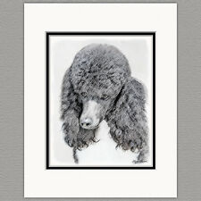 Standard Poodle Parti Black and White Original Art Print 8x10 Matted to 11x14