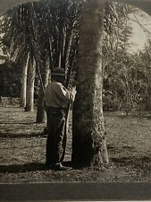 Brazil ~ MAN TAPPING A RUBBER TREE ~ Stereoview 21876 p61 Agricultural