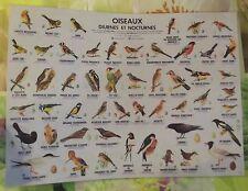 Ancien Objet de Métier Oiseaux Bouvreuil Grive Hirondelle Huppe Mésange Geai Pic