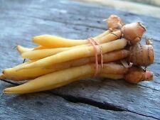 BOESENBERGIA PANDURATA TUBE CHINESS GINGER SPICE FOOD COOK