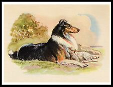 BORDER COLLIE AND LAMB LOVELY VINTAGE STYLE DOG PRINT POSTER