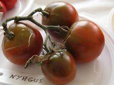 graines de tomate nuagus brune vendu en sachet de 30 graines
