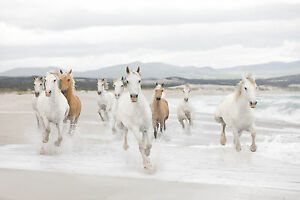 White horses Wall Mural photo Wallpaper for living room 368x254cm no adhesive