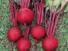 "Beetroot Seeds ""Bulls Blood"" (Approx 100 Seeds),Popular Garden Vegetable"