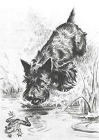 "Scottish Terrier ""Frog"" - Dog Art Print - M. Dennis ""N"""