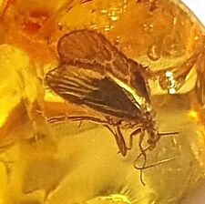 Natur Bernstein fossiler mit Einschluss 1 Insekt  Sammlung L8147