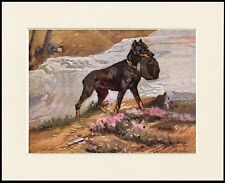DOBERMAN PINSCHER WAR RESCUE DOG GREAT PRINT MOUNTED READY TO FRAME