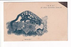 All About Australians A.A.A. (Series A) Native Cat