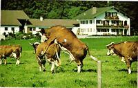 """Vintage Postcard - """"How The Udder Half Lives"""" Bavarian Alps Unposted #2478"""