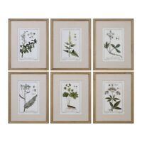 Green Floral Botanical Study - 22.63 inch Floral Print (Set of 6) - 17.63 inches