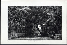 ON THE ROAD FROM GALLE TO COLOMBO 1891 Sri Lanka VICTORIAN ENGRAVING